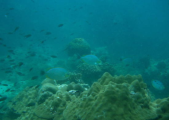 Andamanské moře a potápění, 1. část