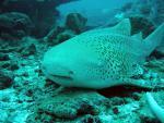 Podmořský život Andamanského moře